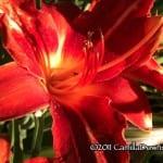 Orange Flower September 2011