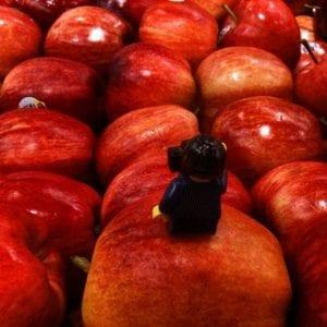 Lego man minifigure on apples