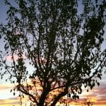 sunset-walk-8-29-16-5