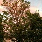 sunset-walk-with-lillian-8-30-16-1