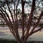 sunset-walk-with-thomas-9-28-16-4