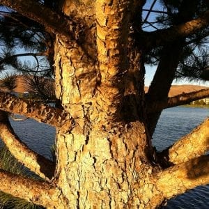 tree-and-branches-up-close-2