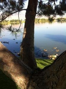 tree-and-lake-and-ducks-july-2016-2
