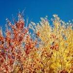 nature-trees-10-26-16-2