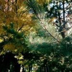 nature-trees-10-26-16-3