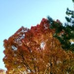 nature-trees-10-26-16-4