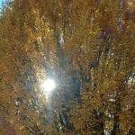 trees-vintage-11-9-16-1