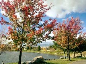 walk-trees-10-27-16