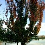 walk-with-lillian-vintage-lake-11-14-16-10