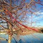 walk-with-lillian-vintage-lake-11-14-16-12