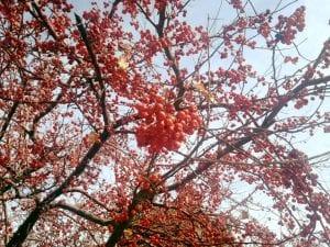 tree-the-vintage-walk-12-5-16