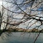 walk-around-lake-11-15-16-2