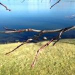 walk-vintage-lake-12-2-16-2