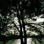 walk-with-thomas-vintage-lake-11-19-16-3