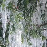winter-wonderland-walk-1-5-17-1