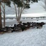 winter-wonderland-walk-1-5-17-2
