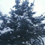 winter-wonderland-walk-1-5-17-5