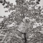 Winter Wonderland Walk Vintage 1.12.17 #2