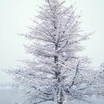 Winter Wonderland Walk Vintage 1.12.17 #6