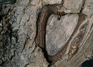Heart in Tree 2.14.12