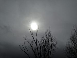 Tree Cradling Sun Cloudy Day Vintage Walk 2.7.17