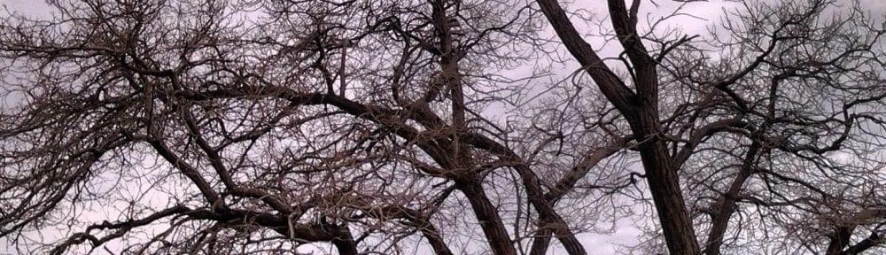 Tree in Virginia City