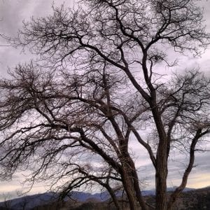 Tree in Virginia City