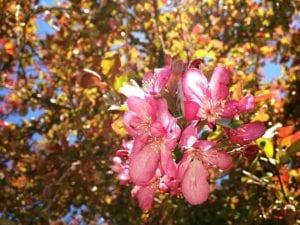 Blossoming Tree Vintage April 2017