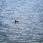 Solo Walk Vintage Lake 4.10.17 #2