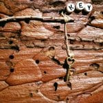 Tree Bark Rock Art Love is the Key April 2017 #2