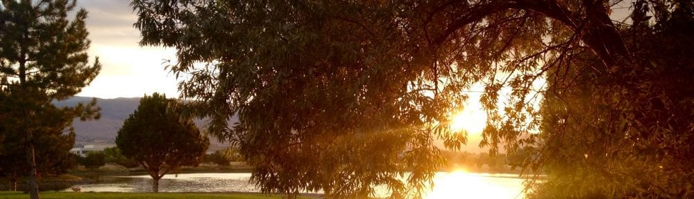 Vintage Lake Walk Sunshine Trail Tree Summer 2016