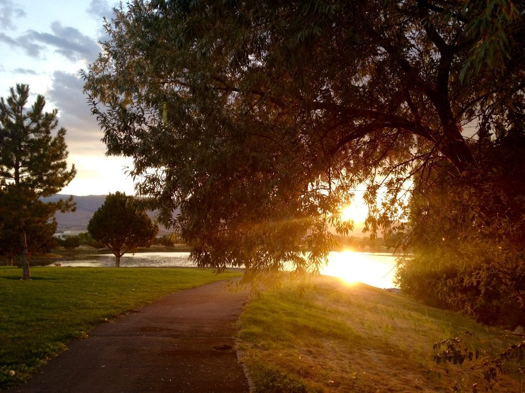 Vintage Lake Walk Sunshine Trail Tree Summer 2016