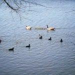 Walk with Lillian Vintage Lake 4.11.17 #2