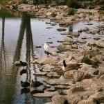 Walk with Lillian Vintage Lake 4.25.17 #4