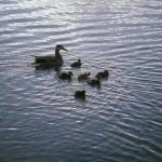Walk with Lillian Vintage Lake 4.25.17 #5