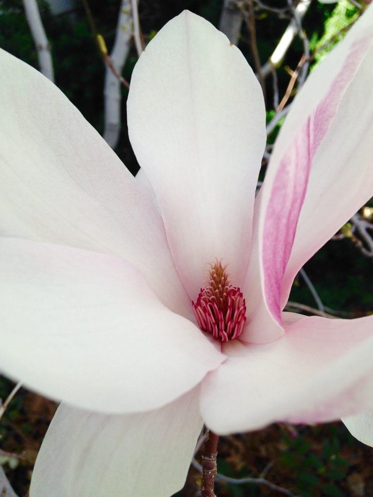 Close Up Flower 2017