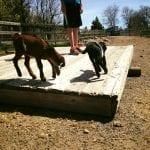 Melinda's Property Field Trip with Thomas 5.2.17 #3