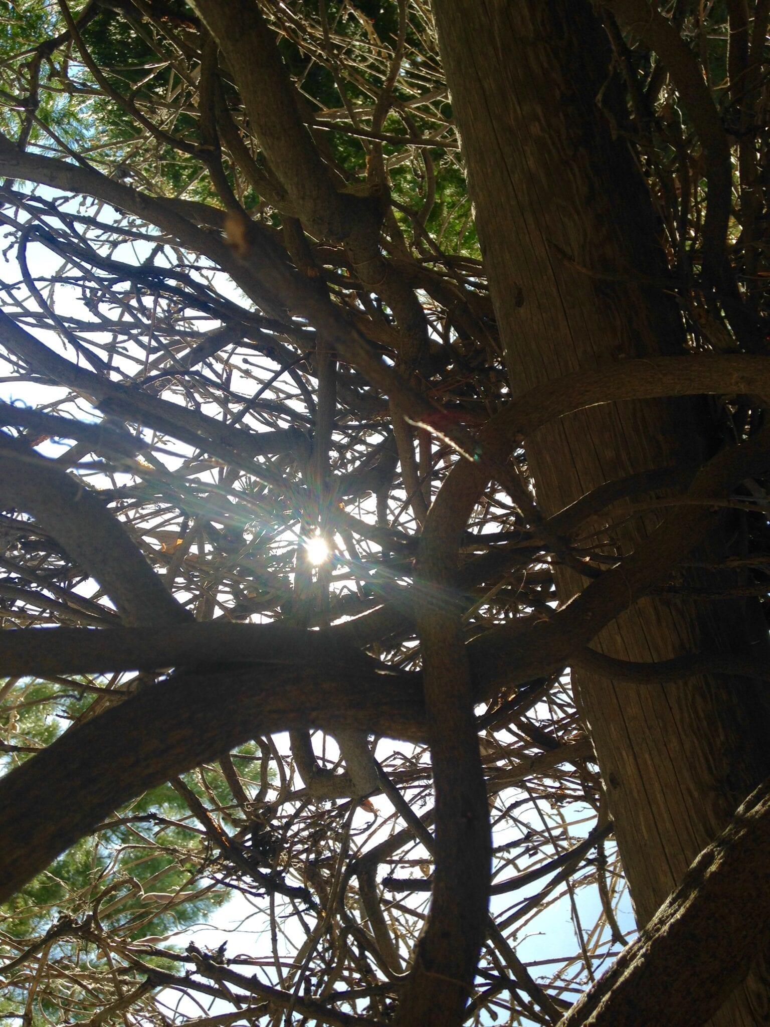 Sun Through Trees Fall 2016 Enhanced