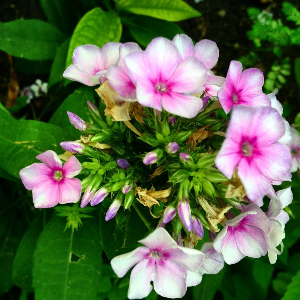 Pink and White Flowers Sweet One Poem 2016