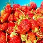 Strawberry Picking Camilla and Thomas 6.13.17 #1