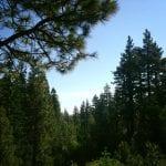 Solo Walk Galena Creek Marilyn's Pond 7.5.17 #1