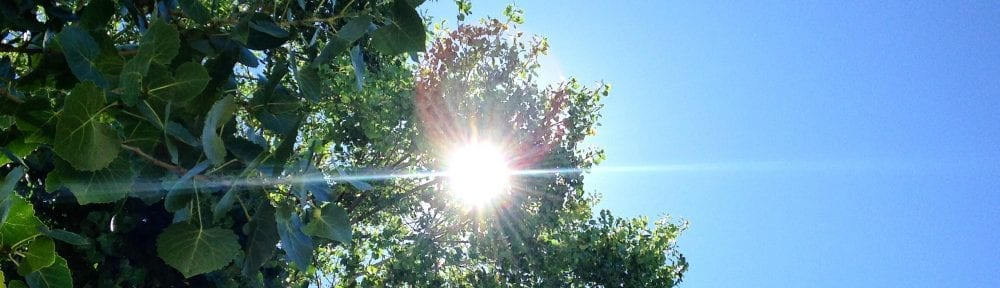 Tree Sunbeams and Blue Sky with Shine Bright Poem 2017