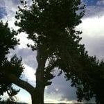 Visiting Barbara Washoe Lake State Park 8.1.17 #1