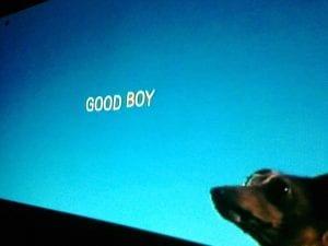 Good Boy Movie 9.9.17