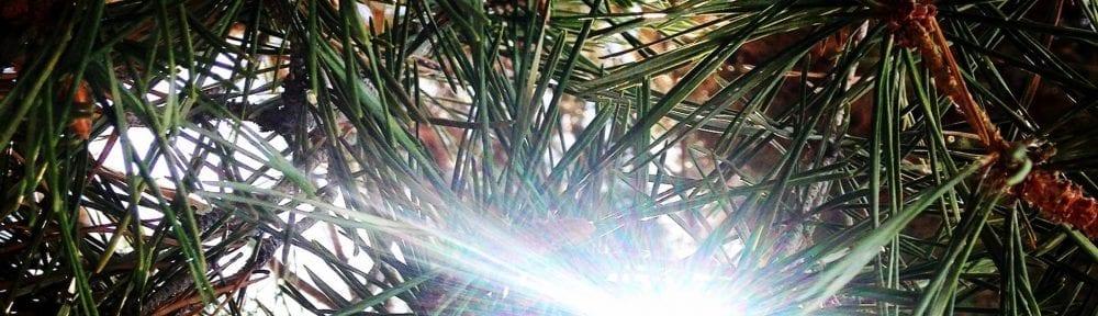 The Light of Freedom Poem Tree and Sunshine Photo 8.2017