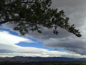 Audrey Harris Park Sky and Tree 9.20.17