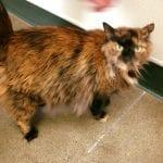 Volunteer Nevada Humane Society 10.27.17 #4