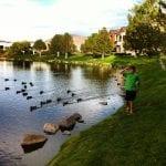 Ducks Following Thomas 10.16.15 #1