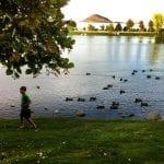 Ducks Following Thomas 10.16.15 #2