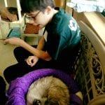 Humane Society 11.10.17 #4